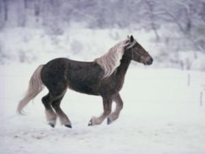 cavallo di carrello